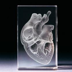 Glasblock - Herz anatomisch