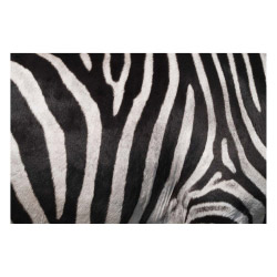 Vinyl Teppich MATTEO 60x90 cm Zebra