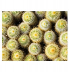 Tischset Vinyl Kaktus