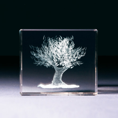 Glasblock - Olivenbaum